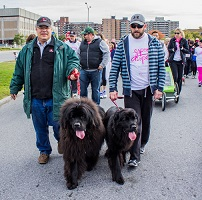 Newfoundland dogs: Moufle & Gerda (Ike x Mabel pups) CIBC Walk For The Cure!