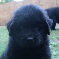 Odin (Ike x Mabel)
