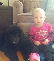 Newfoundland pup: Raven (formerly Marlee)