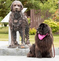 Tillie (Guinness x Cookie) sitting beside newly erected statue of Gander (Nfld)