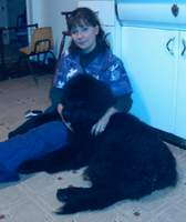 Newfoundland pup Duncan with Shelly