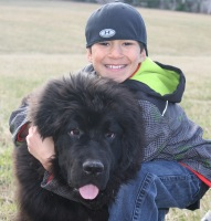 Newfoundland Dog Everest