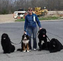 Newfoundland dogs: Willow, Ella Blue and Oliver