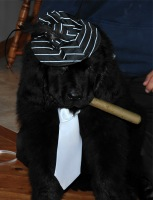 Walter dressed as a mobster for Halloween!